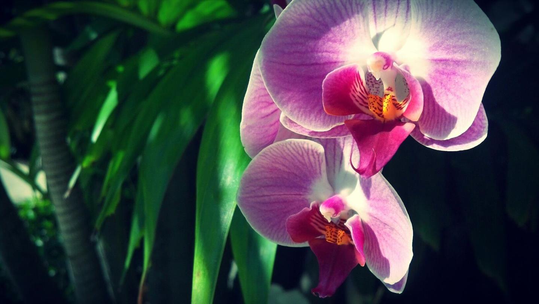 Orchid Near West Palm Beach Beaches